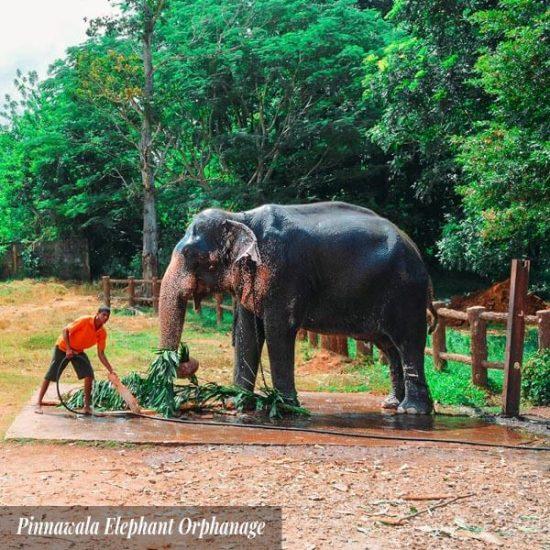 Pinnawala Elephant Orphanage and Pinnawala Zoo