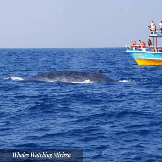 Whales Watching Mirissa